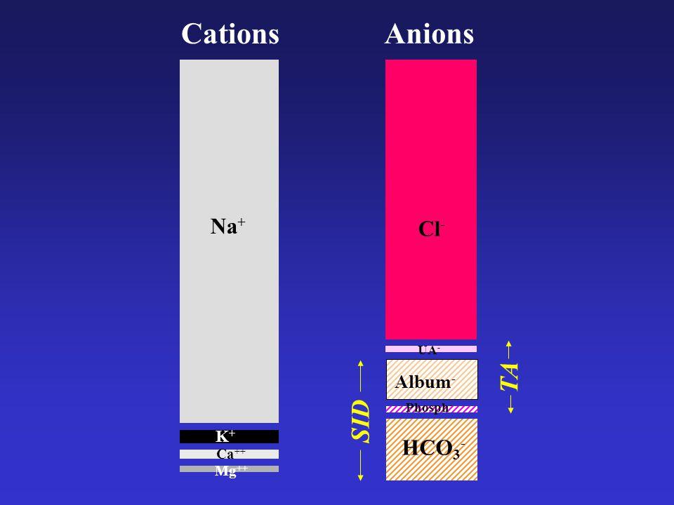 Album - HCO 3 - Phosph - Cl - UA - Cations Anions SID TA Na + K+K+ Mg ++ Ca ++