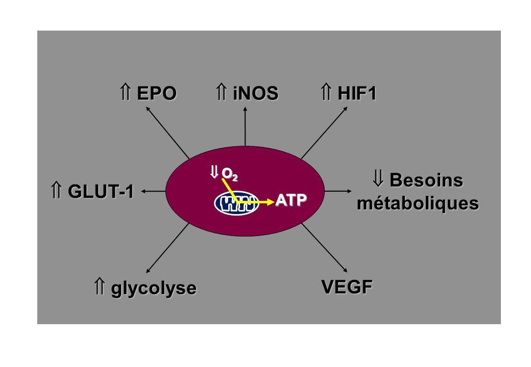 Besoins Besoinsmétaboliques ATP O 2 O 2 VEGF glycolyse glycolyse GLUT-1 GLUT-1 EPO EPO iNOS iNOS HIF1 HIF1