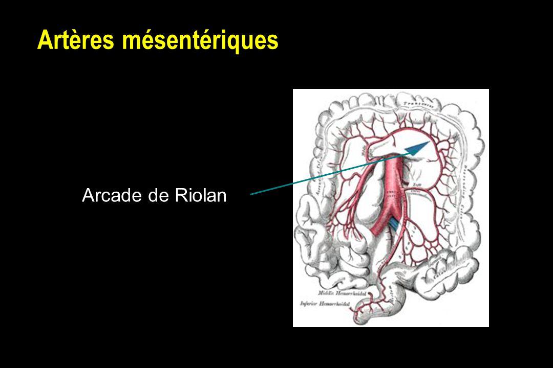 Artères mésentériques Arcade de Riolan