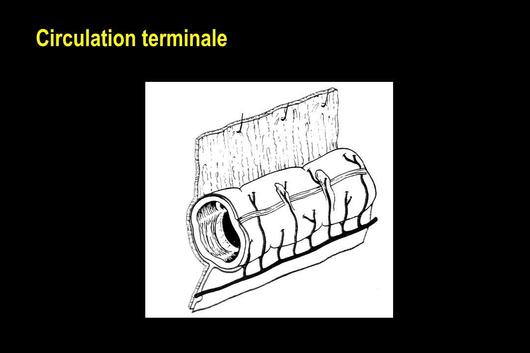 Echographie doppler Gênée par les gaz Nécessite un excellent opérateur Exploration proximale exclusive