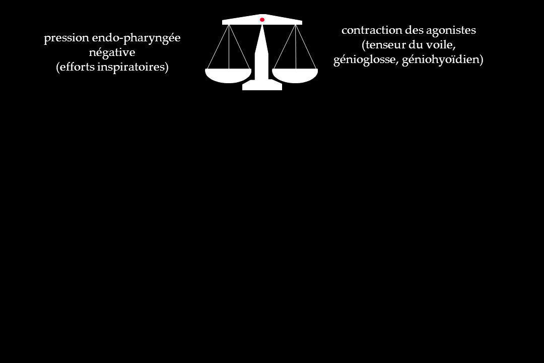 contraction des agonistes (tenseur du voile, génioglosse, géniohyoïdien) pression endo-pharyngée négative (efforts inspiratoires) sommeil paradoxal sédation réveil d une anesthésie Facteurs favorisant du collapsus pharyngé : permanent du calibre du pharynx : os : rétrognathie, micrognathie, rétromaxillie parties molles : macroglossie, hypertrophie vélo-amygdalienne, infiltration de la paroi pharyngée, augmentation de la compliance du pharynx, contraction des muscles dilatateurs du pharynx : retard de contraction, diminution de la puissance SAOS