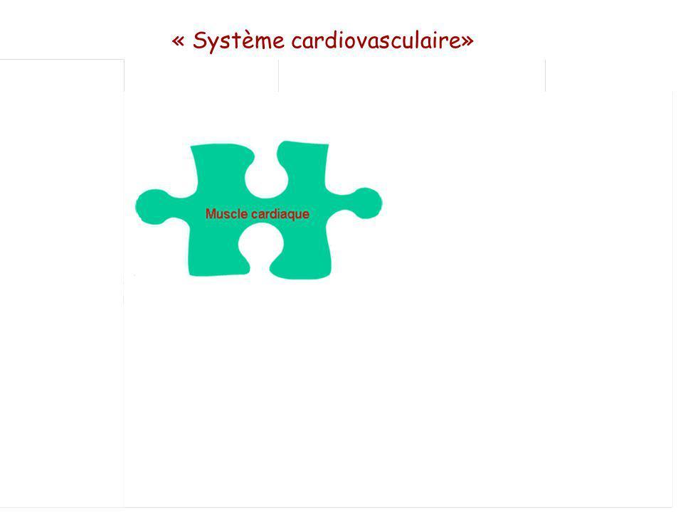 Muscle cardiaque Vaisseaux périphériques Système nerveux autonome Système neuro Hormonaux (FAN, SRA, AVP…) « Système cardiovasculaire» Effet Frank-Starling Effet Bowdtich (force fréquence)
