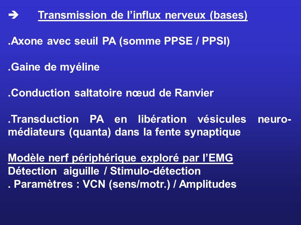 Transmission de linflux nerveux (bases).Axone avec seuil PA (somme PPSE / PPSI).Gaine de myéline.Conduction saltatoire nœud de Ranvier.Transduction PA