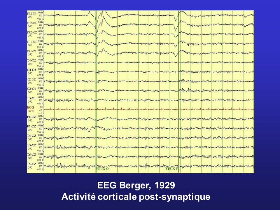 EEG Berger, 1929 Activité corticale post-synaptique