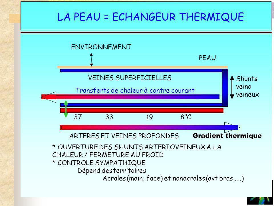 La peau- échangeur thermique LA PEAU = ECHANGEUR THERMIQUE Transferts de chaleur à contre courant ENVIRONNEMENT PEAU VEINES SUPERFICIELLES ARTERES ET