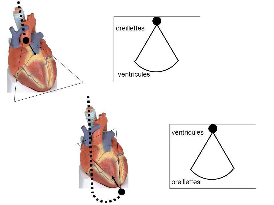 oreillettes ventricules oreillettes