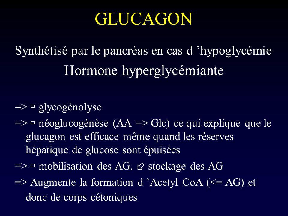 GLUCAGON Synthétisé par le pancréas en cas d hypoglycémie Hormone hyperglycémiante => glycogènolyse => néoglucogénèse (AA => Glc) ce qui explique que