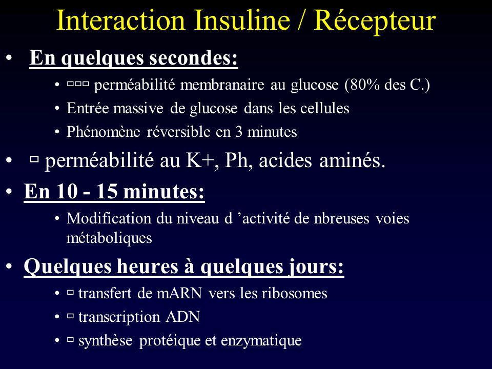 Insuline / Muscle Muscle: Dépendant de l insuline pour capter le glucose Au repos et à jeun:métabolisme énergétique basé sur les acides gras car insulinémie basse et mb imperméable Exercice physique: mb devient perméable, même en l absence d insuline –Utilisation préférentielle du Glc en cas d exercice physique Post prandiale: insulinémie et glycémie haute –Stockage dans le muscle sous forme de glycogène musculaire, réutilisable secondairement même en l absence d O2 (=>lactate) en cas d exercice intense et court