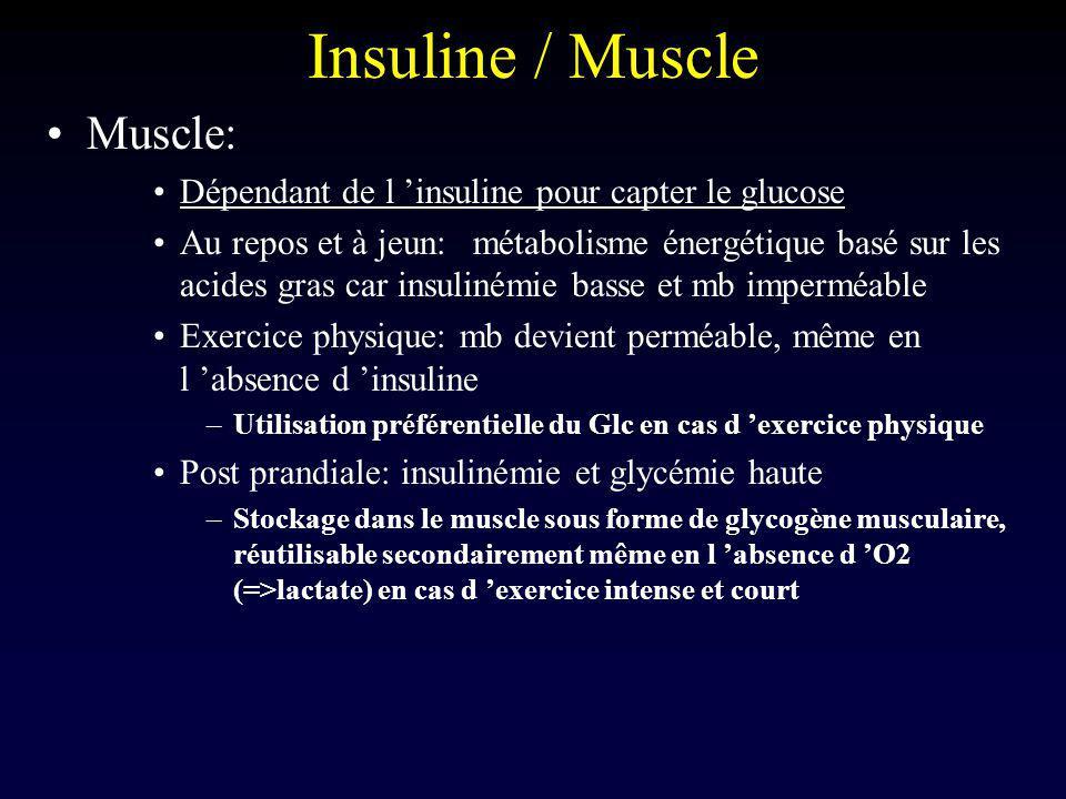 Insuline / Foie Foie = organe tampon de la glycémie En post prandial: –Captation du Glc ingéré pendant le repas et transformation en glycogène grâce au pic d insuline (glycogène synthase) –Au delà des capacités de stockage (6% masse hépatique), transformation Glc => AGL => TG => adipocytes A distance des repas: – Glycémie => Insulinémie => Glycogène synthase –Glycogène => Glucose –Maintient de la glycémie (neurones +++)