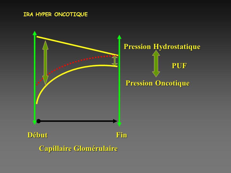 IRA HYPER ONCOTIQUE Début Fin Pression Hydrostatique Pression Oncotique PUF Capillaire Glomérulaire