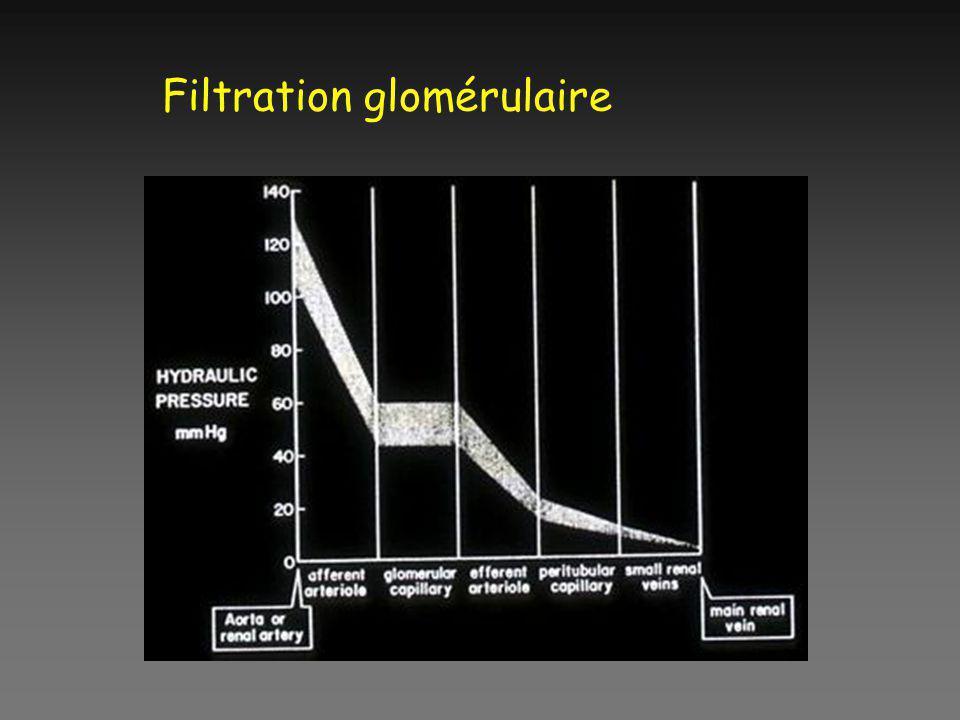 Filtration glomérulaire