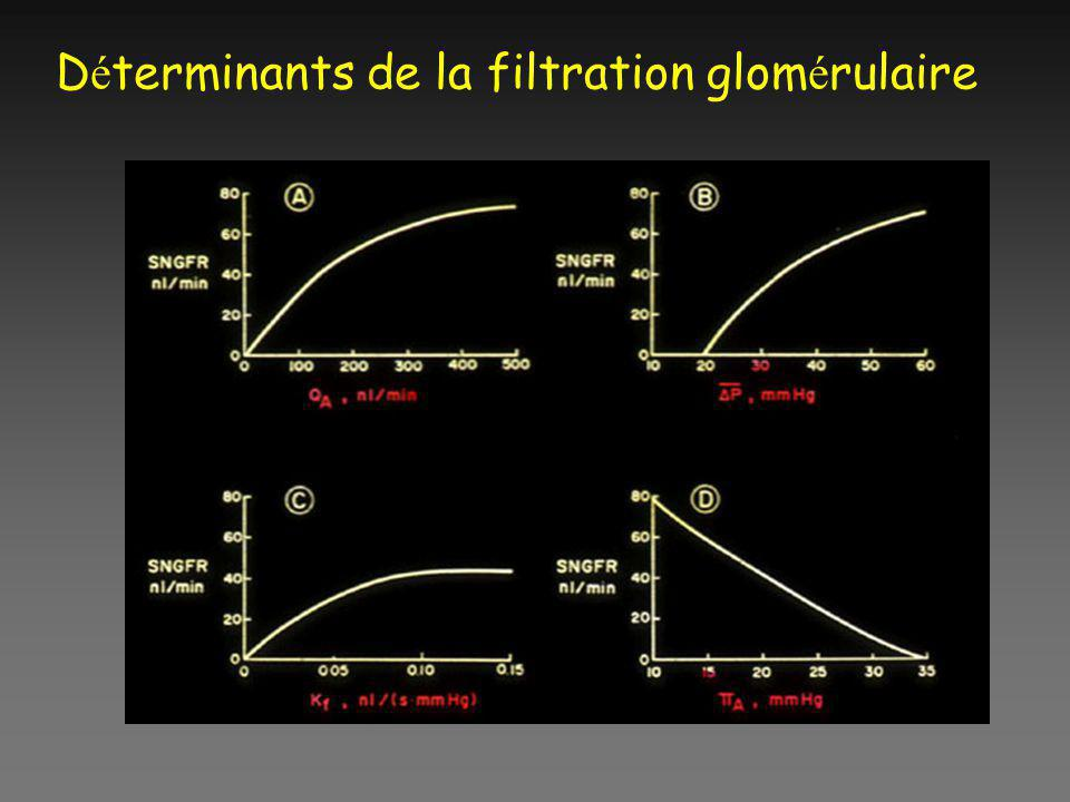 D é terminants de la filtration glom é rulaire