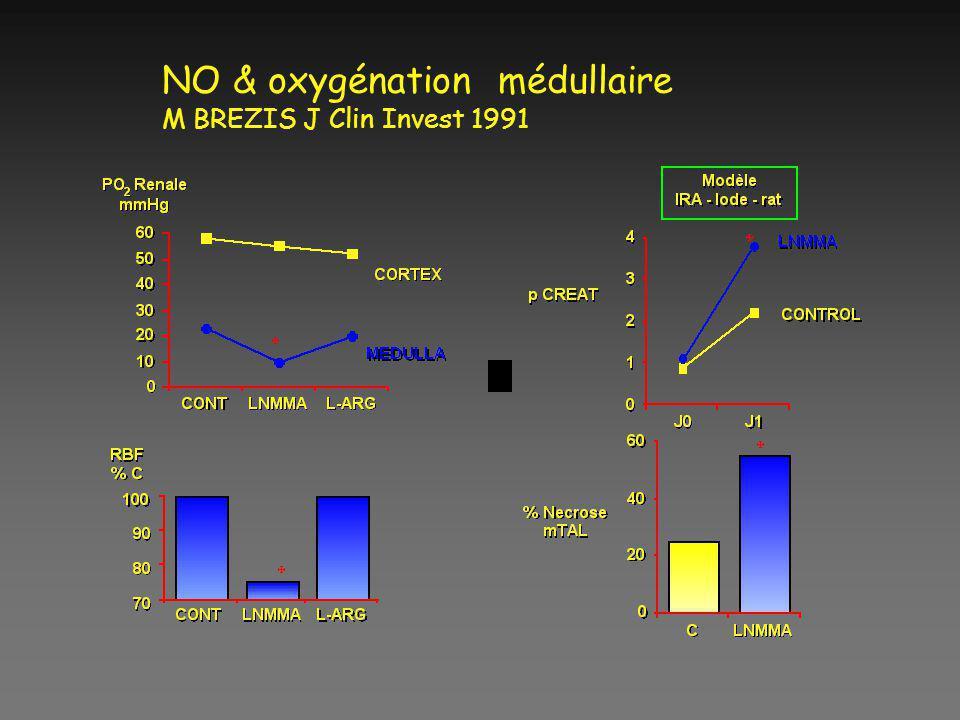 NO & oxygénation médullaire M BREZIS J Clin Invest 1991