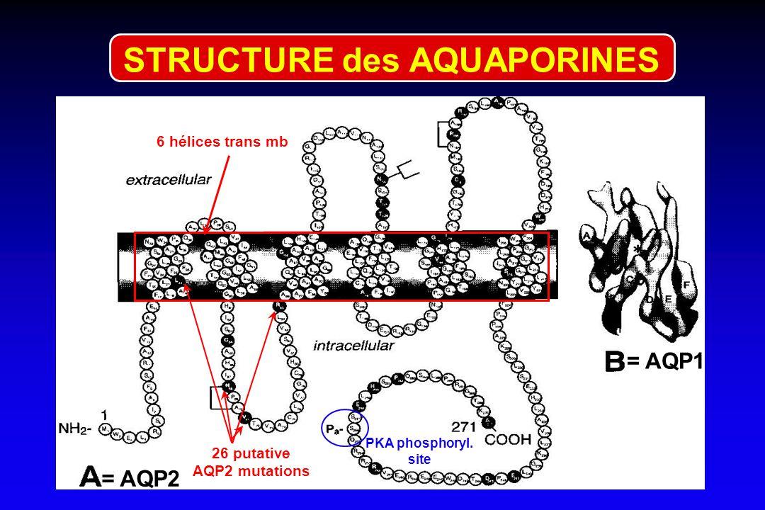 cible de l'ADH = V récepteurs canaux à eau= aquaporines (9) REGULATION DES PERTES RENALES 1 2 3 4 5