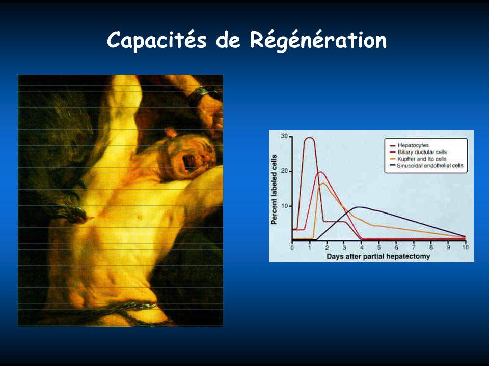 Capacités de Régénération