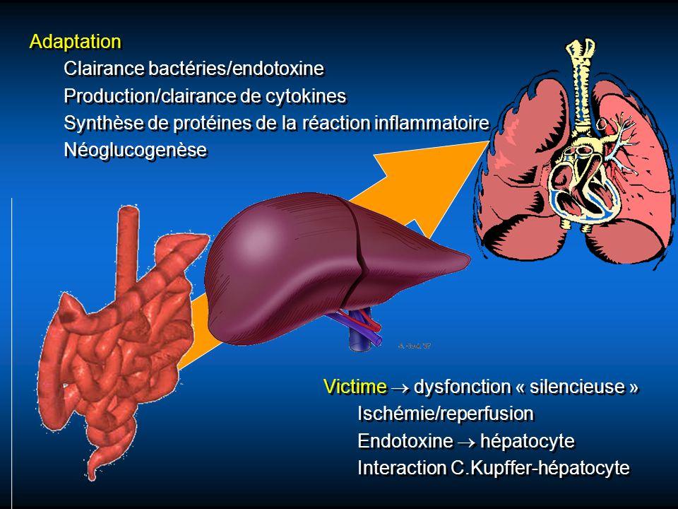 Adaptation Clairance bactéries/endotoxine Production/clairance de cytokines Synthèse de protéines de la réaction inflammatoire Néoglucogenèse Adaptati