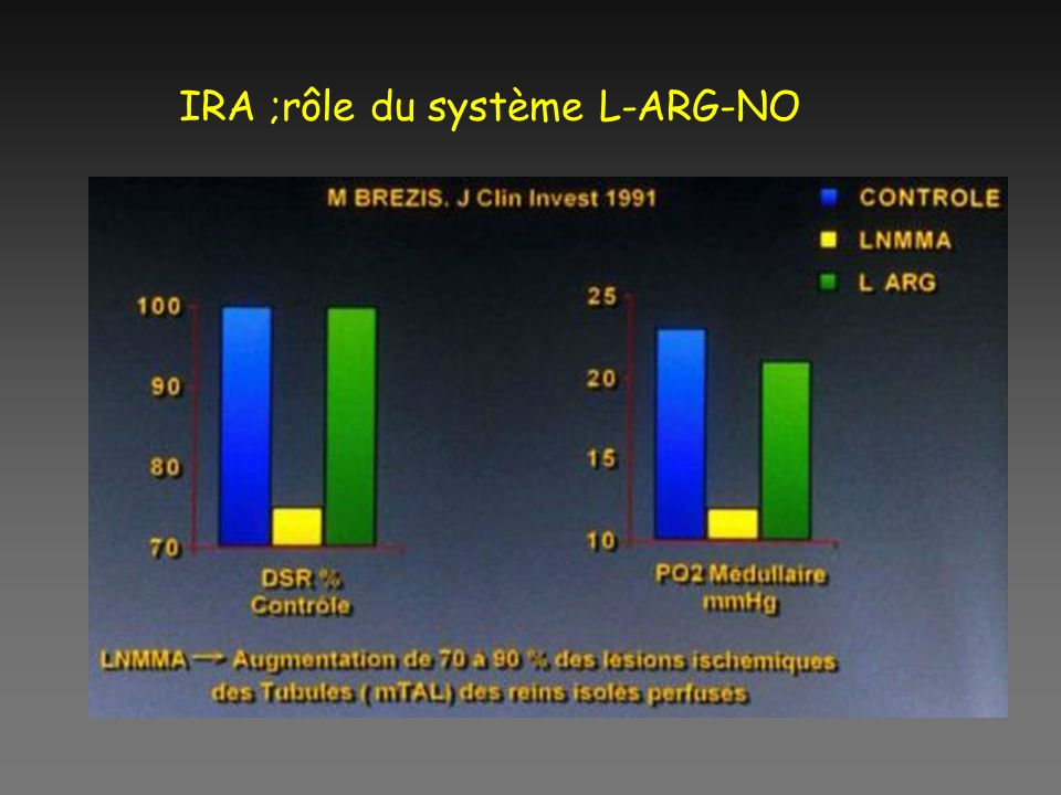IRA ;rôle du système L-ARG-NO
