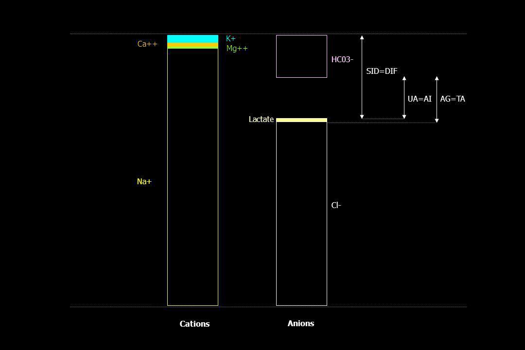 Lactate HC03- Cl- Ca++ Mg++ Na+ K+ SID=DIF AG=TAUA=AI Cations Anions