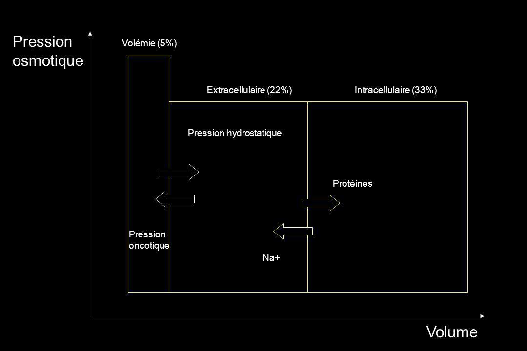 Pression osmotique Volume Pression hydrostatique Pression oncotique Volémie (5%) Extracellulaire (22%) Protéines Na+ Intracellulaire (33%)