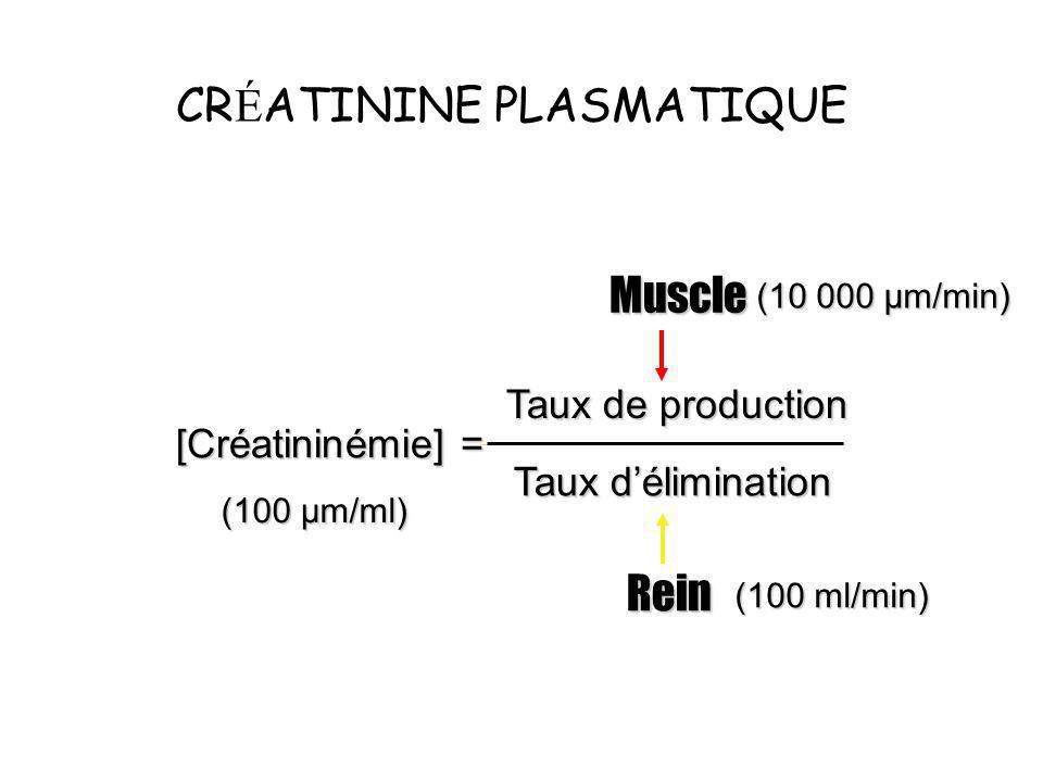 CR É ATININE PLASMATIQUE [Créatininémie] = Taux de production Taux délimination Muscle Rein (10 000 µm/min) (100 ml/min) (100 µm/ml)