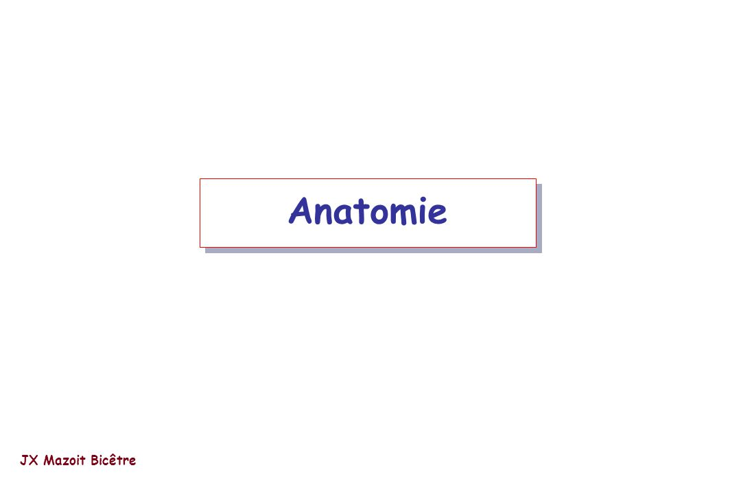 Anatomie JX Mazoit Bicêtre
