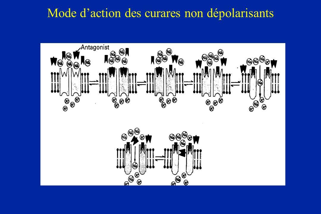 Mode daction des curares non dépolarisants
