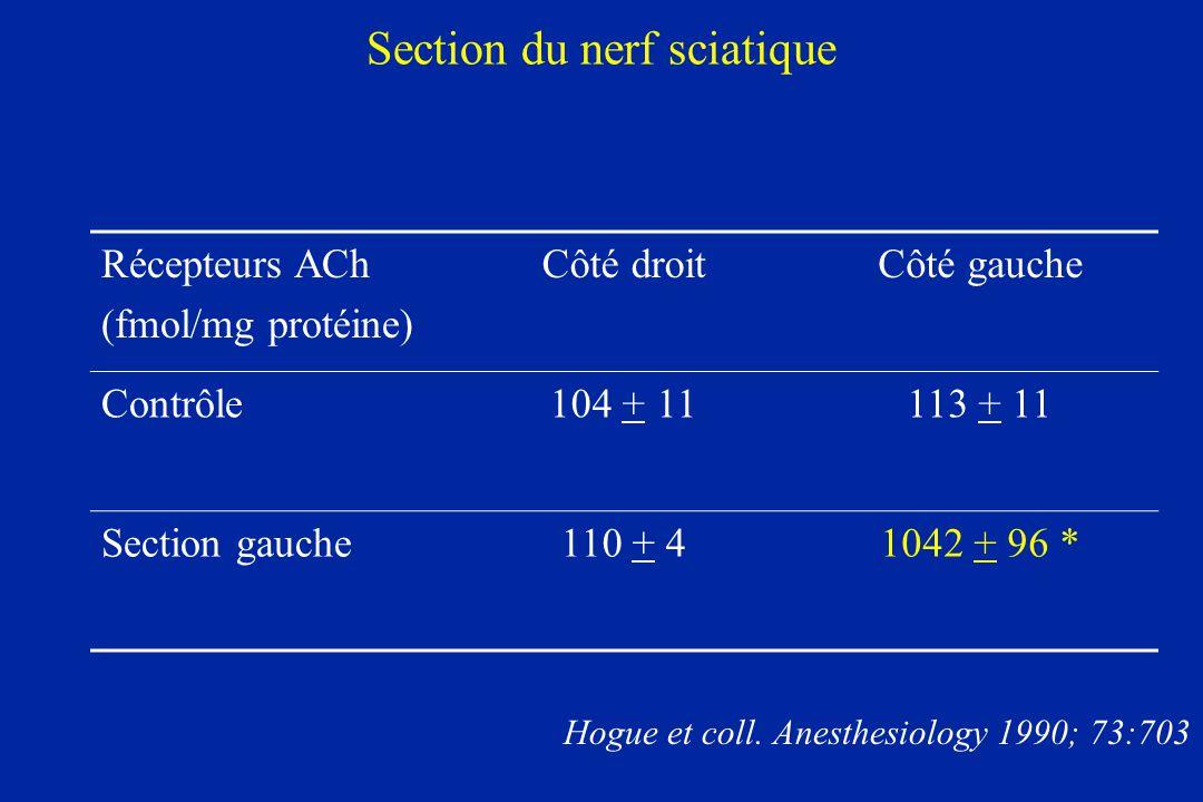 Section du nerf sciatique Récepteurs ACh (fmol/mg protéine) Côté droitCôté gauche Contrôle104 + 11113 + 11 Section gauche110 + 41042 + 96 * Hogue et c