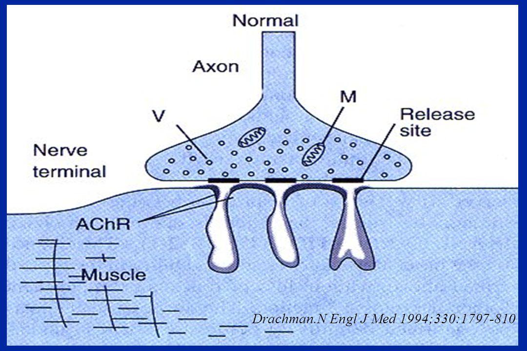 Réponse musculaire en fonction de lintensité de stimulation Kopman et coll.