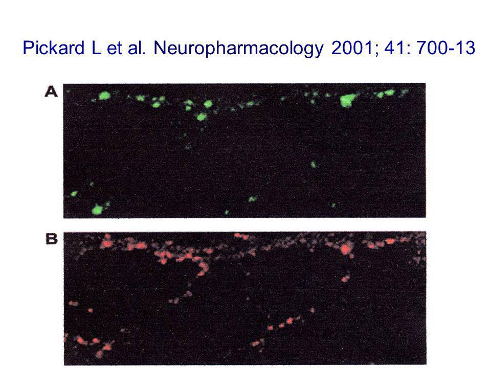 Pickard L et al. Neuropharmacology 2001; 41: 700-13