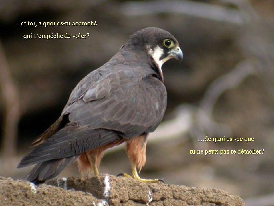 Les chroniques racontent que depuis le faucon vola libre et sans restriction aucune et le roi simplement prenait plaisir à le regarder….