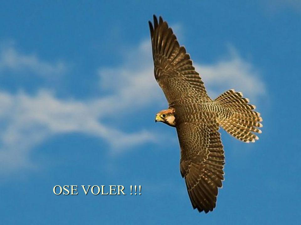 Arrête de taccrocher à ta propre branche et prends le risque de voler plus haut prends le risque de voler plus haut