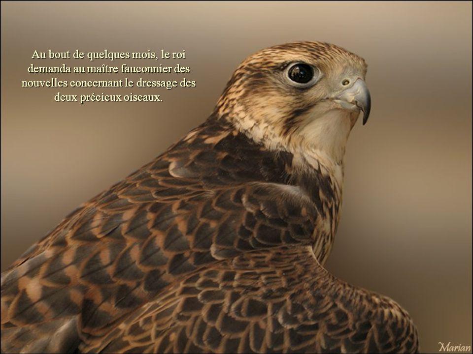 Il était une fois un roi dun pays lointain qui reçut comme offrande deux jeunes faucons.