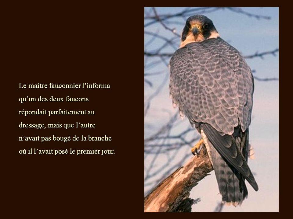 Le maître fauconnier linforma quun des deux faucons répondait parfaitement au dressage, mais que lautre navait pas bougé de la branche où il lavait posé le premier jour.
