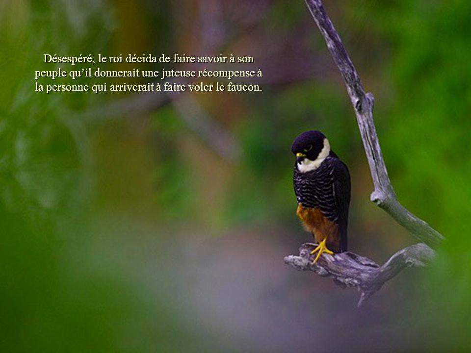 Désespéré, le roi décida de faire savoir à son peuple quil donnerait une juteuse récompense à la personne qui arriverait à faire voler le faucon.