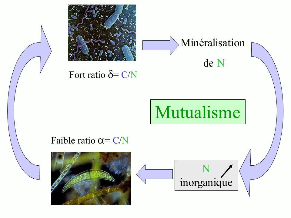 Minéralisation de N Faible ratio = C/N Fort ratio = C/N N inorganique Mutualisme