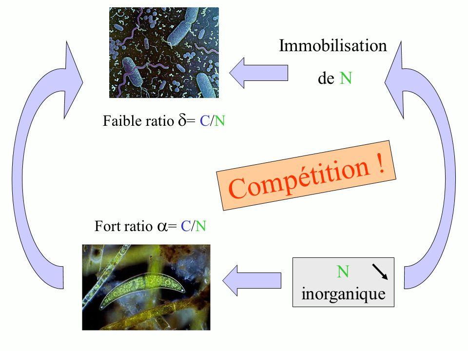Compétition ! Fort ratio = C/N Faible ratio = C/N Immobilisation de N N inorganique