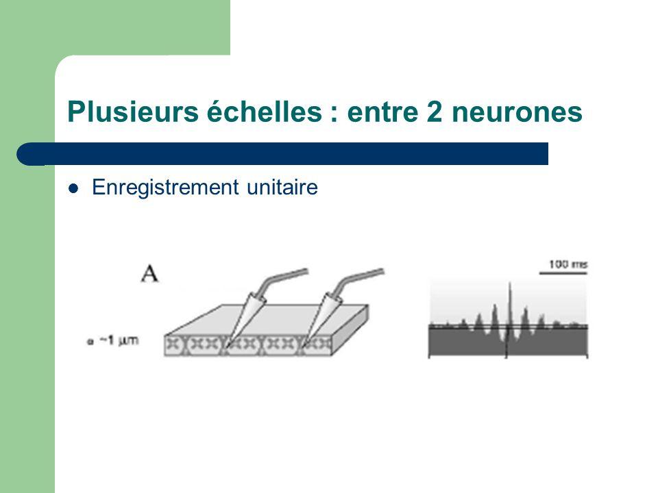 Plusieurs échelles : entre 2 neurones Enregistrement unitaire
