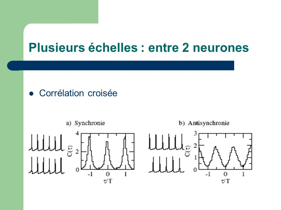 Plusieurs échelles : entre 2 neurones Corrélation croisée