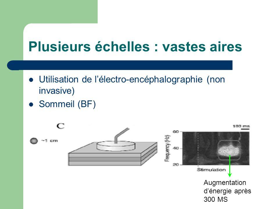 Plusieurs échelles : vastes aires Utilisation de lélectro-encéphalographie (non invasive) Sommeil (BF) Augmentation dénergie après 300 MS