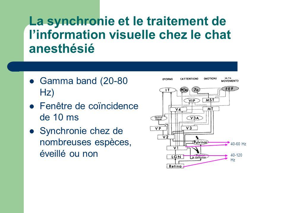 La synchronie et le traitement de linformation visuelle chez le chat anesthésié Gamma band (20-80 Hz) Fenêtre de coïncidence de 10 ms Synchronie chez de nombreuses espèces, éveillé ou non 40-60 Hz 40-120 Hz