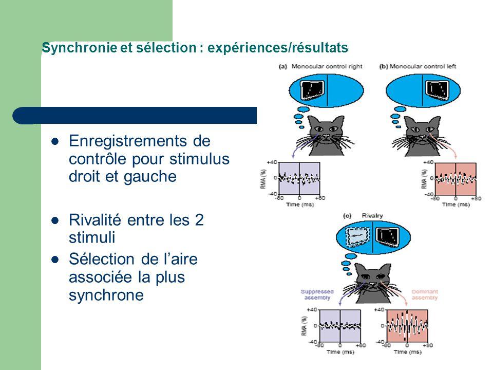 Synchronie et sélection : expériences/résultats Enregistrements de contrôle pour stimulus droit et gauche Rivalité entre les 2 stimuli Sélection de la