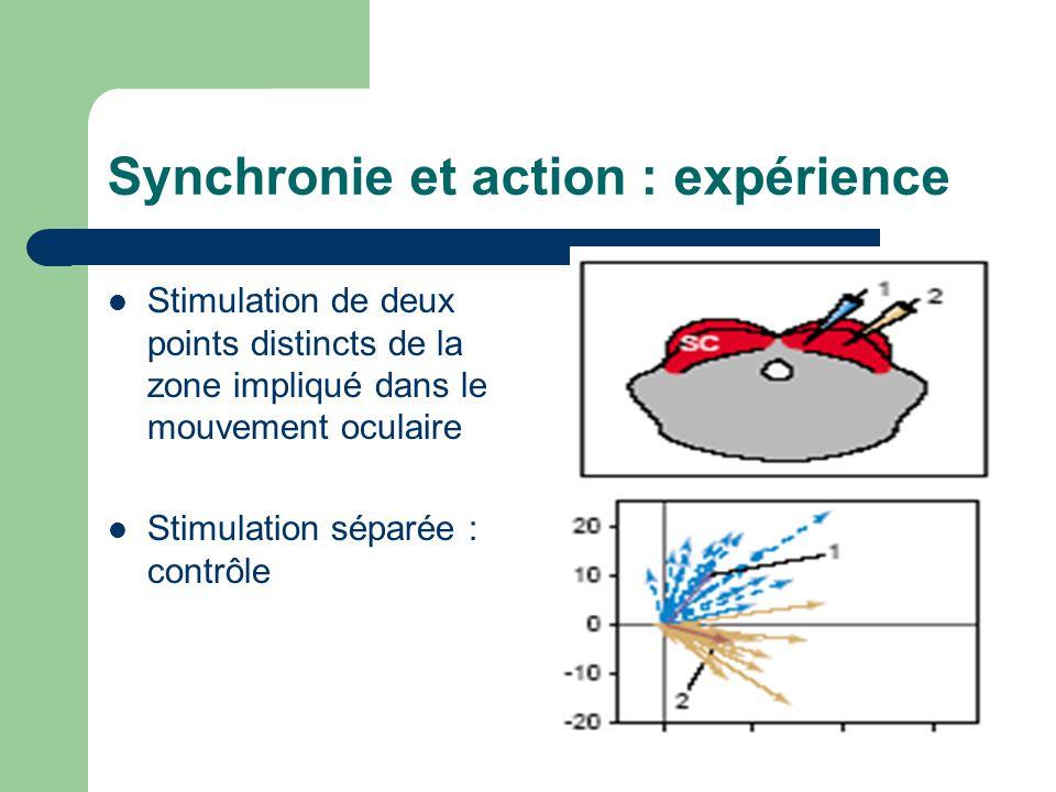 Synchronie et action : expérience Stimulation de deux points distincts de la zone impliqué dans le mouvement oculaire Stimulation séparée : contrôle