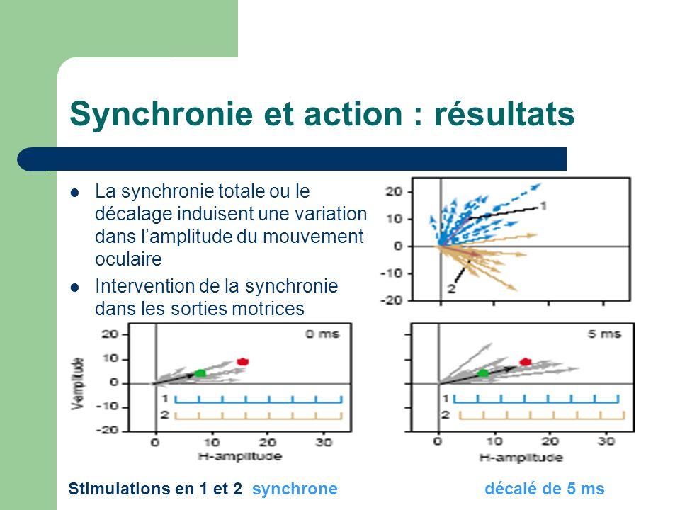 Synchronie et action : résultats La synchronie totale ou le décalage induisent une variation dans lamplitude du mouvement oculaire Intervention de la synchronie dans les sorties motrices Stimulations en 1 et 2 synchrone décalé de 5 ms