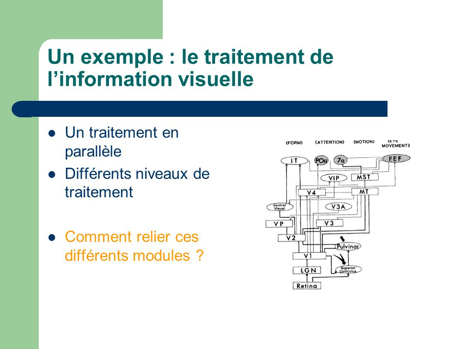 Un exemple : le traitement de linformation visuelle Un traitement en parallèle Différents niveaux de traitement Comment relier ces différents modules