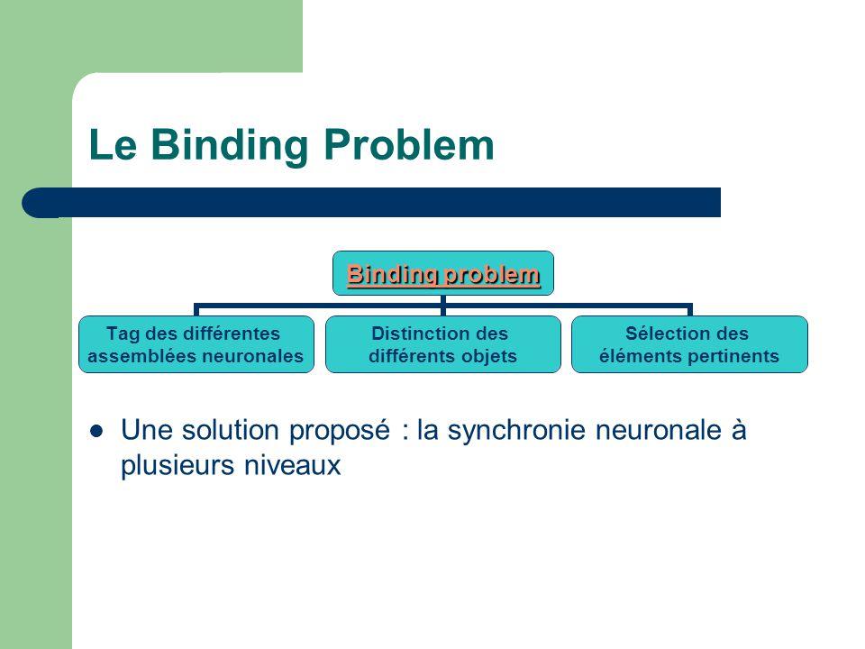 Le Binding Problem Binding problem Tag des différentes assemblées neuronales Distinction des différents objets Sélection des éléments pertinents Une solution proposé : la synchronie neuronale à plusieurs niveaux