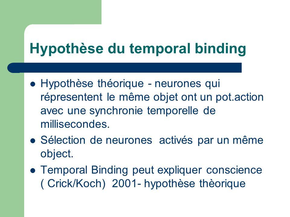 Hypothèse du temporal binding Hypothèse théorique - neurones qui répresentent le même objet ont un pot.action avec une synchronie temporelle de millis