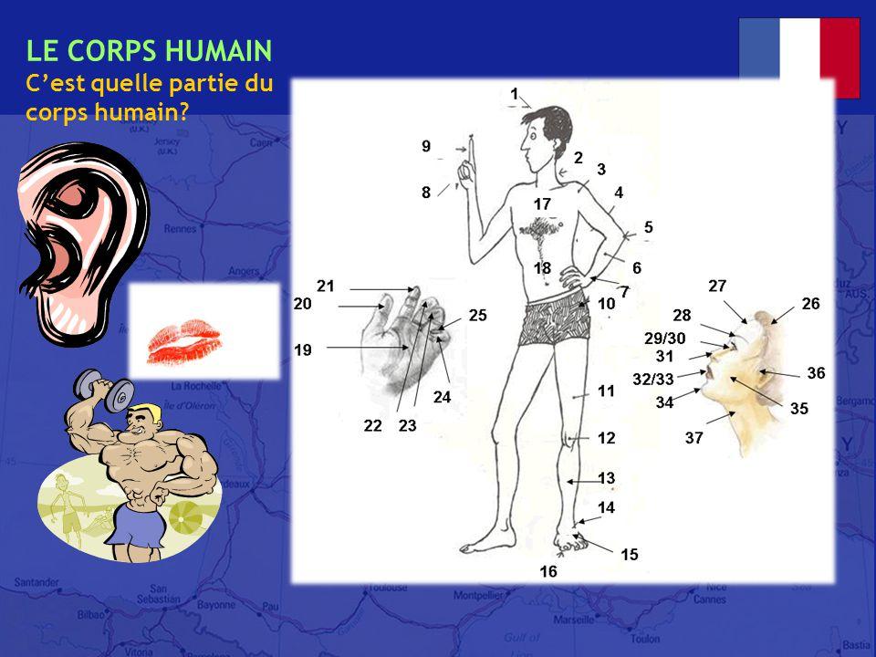 français 2 le 7-8 mai 2014 ActivitéClasseur I. Le corps humain : Nouveaux mots de vocabulaire .