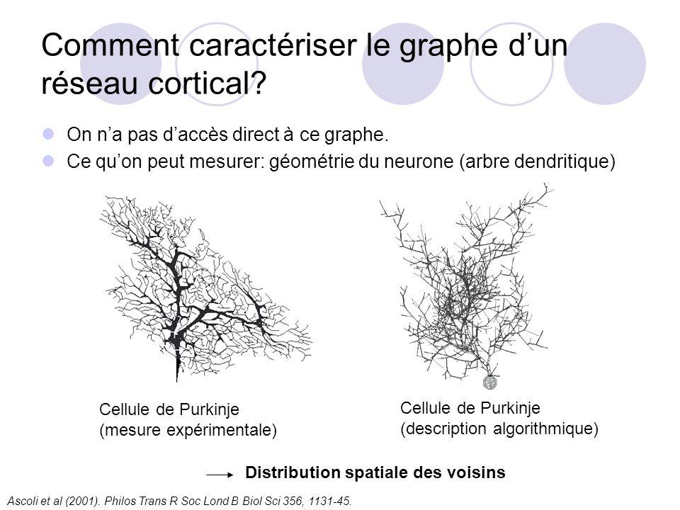 Comment caractériser le graphe dun réseau cortical? On na pas daccès direct à ce graphe. Ce quon peut mesurer: géométrie du neurone (arbre dendritique
