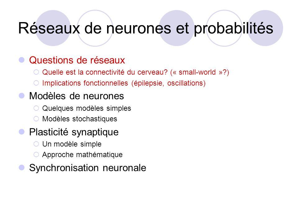 Réseaux de neurones et probabilités Questions de réseaux Quelle est la connectivité du cerveau? (« small-world »?) Implications fonctionnelles (épilep