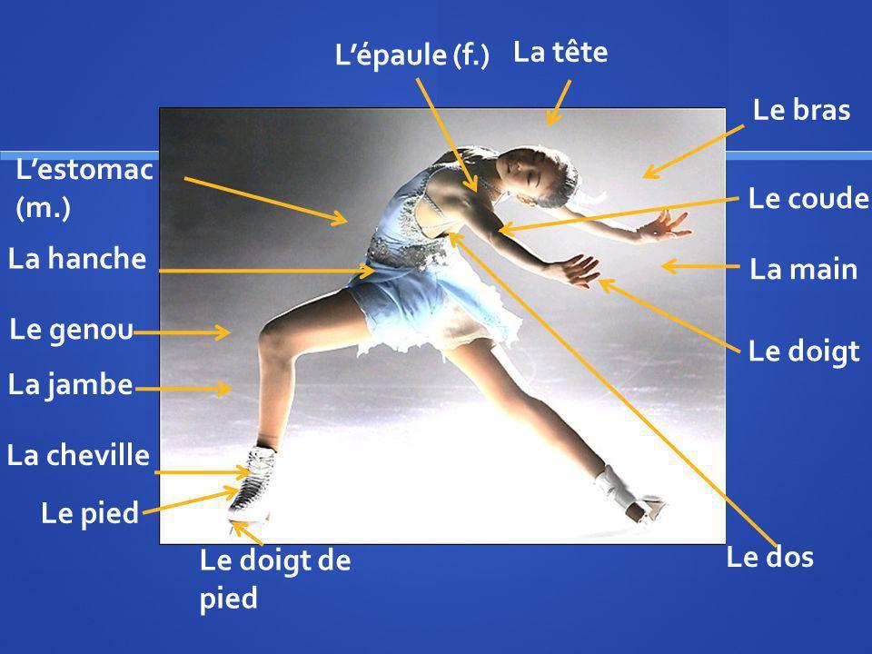 Le pied La jambe Le genou La cheville La hanche La tête Le bras La main Le coude Le doigt de pied Le doigt Lépaule (f.) Le dos Lestomac (m.)